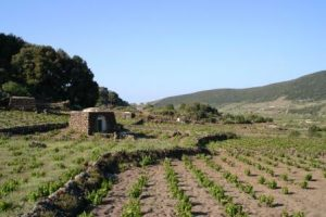 Photo: Consorzio Pantelleria Island