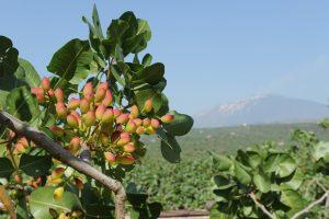 Photo: Blog Il Primo orto