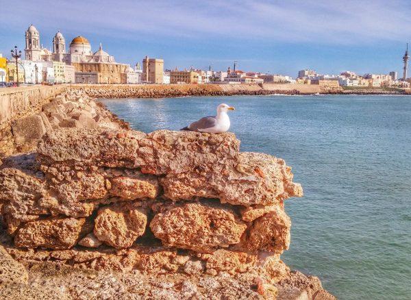 landscape-sea-coast-sand-rock-bird-705887-pxhere.com